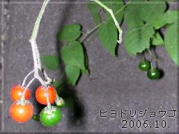 0610hiyodori1