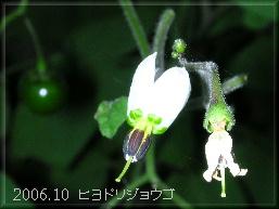 0610hiyodori2
