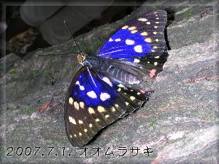070701oomurasakiosu