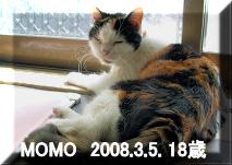 Momo080305