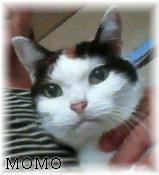 Momo061005