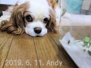 190611andy