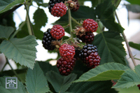 100716blackberry