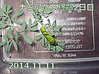141111namiagehasyuurei2