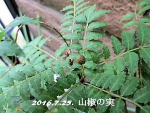 160725sansyo_mi1