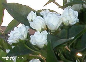 mokkou2005