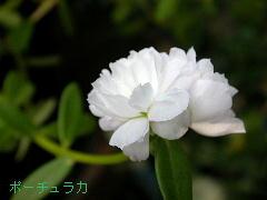 potyu01.jpg