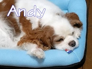 200728andy